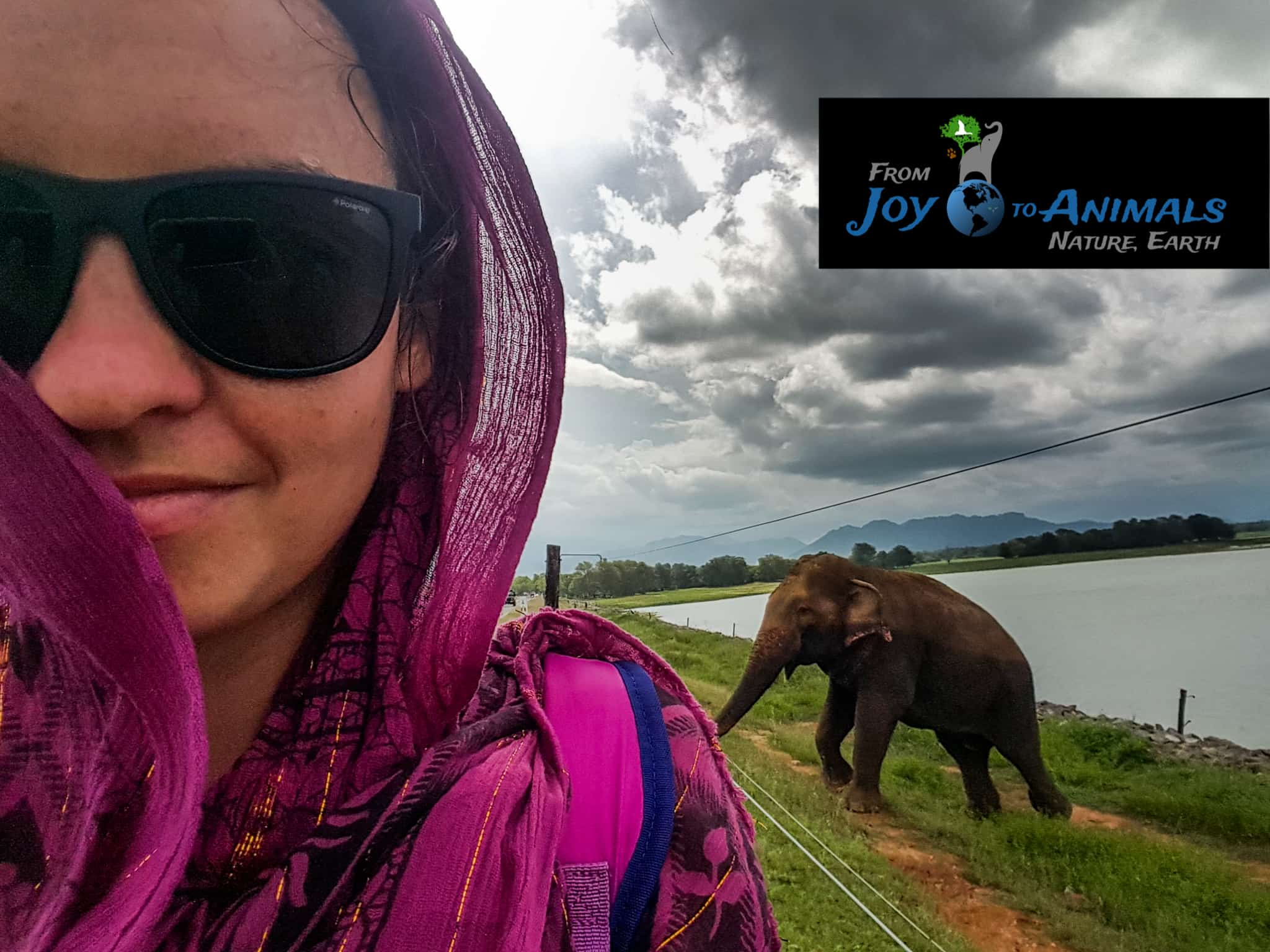 Première rencontre éléphantesque