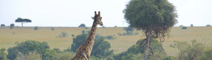 Rencontre avec une Girafe : L'Univers entier, la Terre ne sont qu'Amour